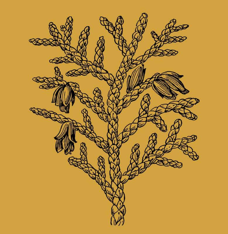 aboutus-artist2-tree